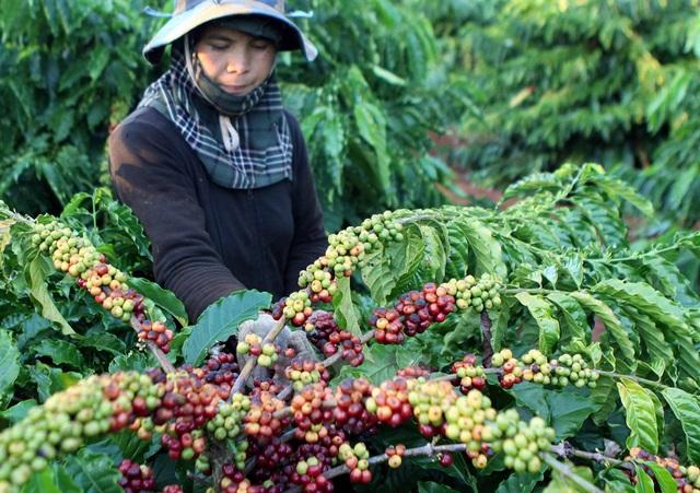 Người nông dân đang rất khát vốn, nhưng tín dụng của Ngân hàng dường như chưa đi tới, quá khắt khe đối với họ, đặc biệt nông hộ nhỏ, vùng bà con dân tộc thiểu số, nơi cần vốn thoát nghèo