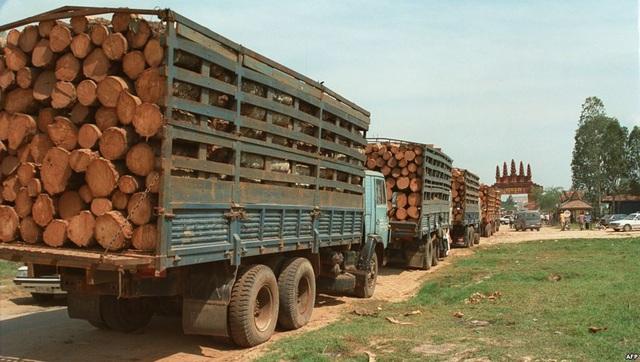 Nhập khẩu gỗ của Việt Nam ngày càng tăng, trong khi đó Việt Nam chưa có cơ chế kiểm soát tính chất hợp pháp của nguồn gốc gỗ. Do đó, rủi ro đã và đang đặt ra đối với xuất khẩu ngành gỗ của Việt Nam sang các nước lớn (ảnh minh họa - nhập khẩu gỗ từ Campuchia)