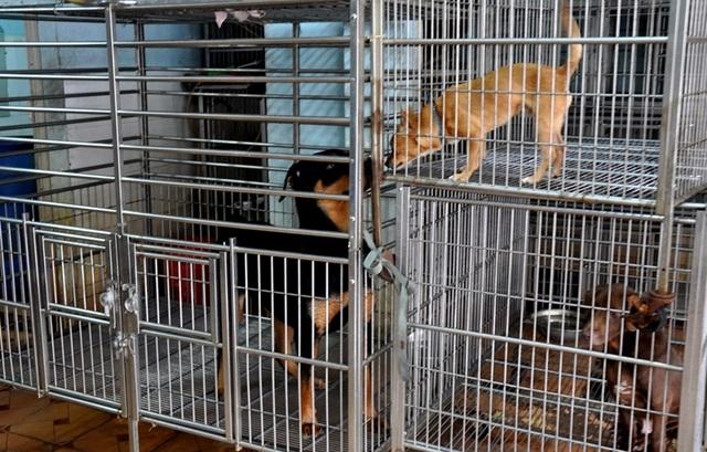 Nhiều khổ chủ mất ăn, mất ngủ vì chó cưng bị bắt (hình minh họa).