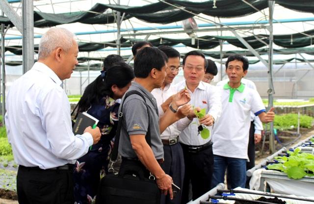 Phó Chủ tịch Quốc hội Phùng Quốc Hiển ăn thử rau sạch ngay tại vườn và mời các thành viên trong đoàn cùng thử.