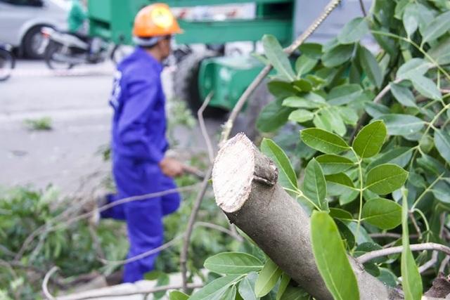 Cành cây được dọn dẹp chuyển đi ngay sau khi chặt tỉa để giảm thiểu ảnh hưởng đến việc lưu thông trên tuyến đường vốn đã là điểm nóng ùn tắc.