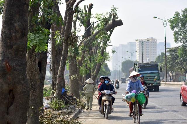 Mới đây, Chủ tịch UBND TP Hà Nội Nguyễn Đức Chung đã kiểm tra đột xuất công tác cắt tỉa, đánh chuyển cây xanh trên đường Phạm Văn Đồng. Tại buổi kiểm tra, ông Chung nhắc lại quan điểm thành phố sẽ không trồng lại cây xà cừ đã đánh chuyển trên các tuyến phố vì tốn kém gấp nhiều lần trồng cây khác.