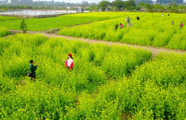 Để có thể vào tham quan, chụp ảnh, chủ vườn sẽ thu phí từ 15.000 - 20.000 đồng/người. Được biết, thời điểm đông khách đến tham quan nhất thường là vào buổi chiều.
