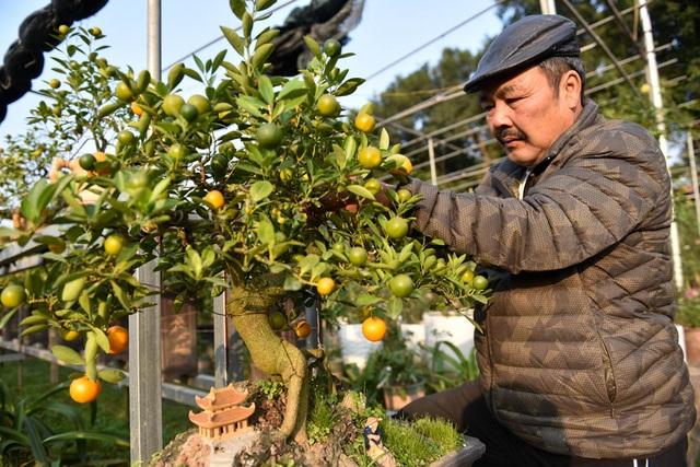 Theo ông Xuân, quất được chọn ghép có tuổi tương đương với tuổi cần thăng. Ghép xong phải che cây tránh nắng, mưa, sau gần một tháng, nếu quất nảy mầm là tin hiệu ghép thành công.
