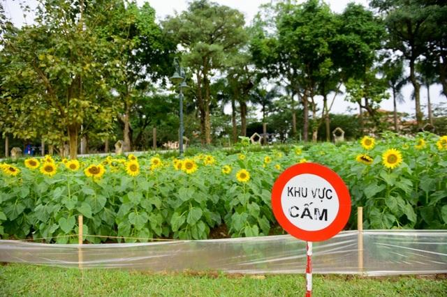 Để tránh du khách làm hỏng hoa, Ban Quản lý khu di tích Hoàng thành Thăng Long đã đặt biển cấm du khách vào khuôn viên trồng hoa.