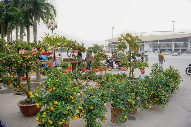 Những ngày gần đây, quất cảnh đã bắt đầu được bày bán ở Hà Nội phục vụ Tết Nguyên đán, trong đó có khu vực giới thiệu và bán cây cảnh ở Mỹ Đình.
