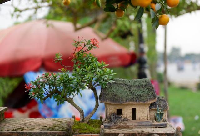 Không chỉ quất cổ thụ mà những cây cảnh khác cũng được tạo thế bonsai cầu kì phù hợp nhu cầu đa dạng của người chơi.