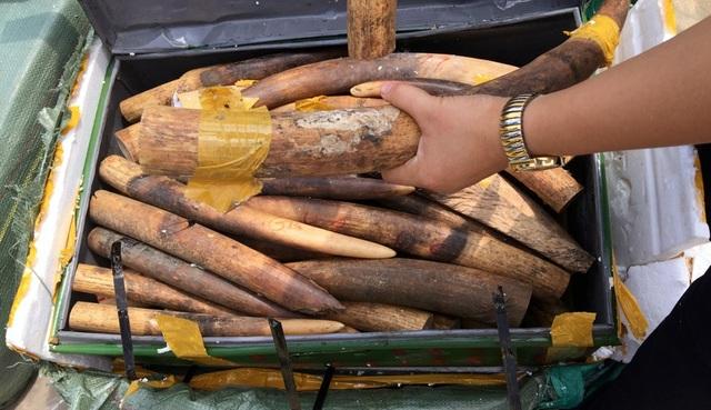Số ngà động vật nghi là ngà voi bị phát hiện.