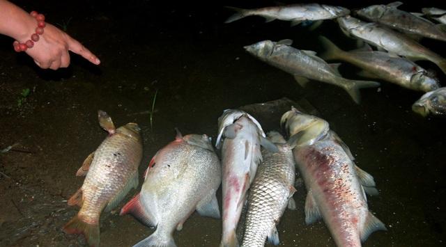 Nhiều cá lớn chết bất thường, trôi dạt vào ven bờ.