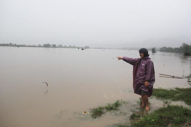 Hàng trăm ha cây trồng của người dân TX Ayun Pa bị nước nhấn chìm