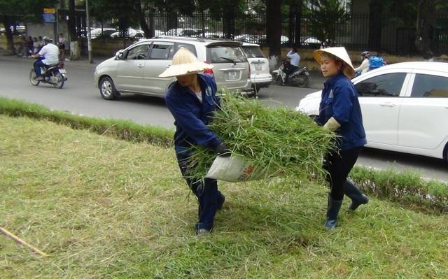 Hà Nội: Công nhân chật vật cắt cỏ dại trên phố - 8