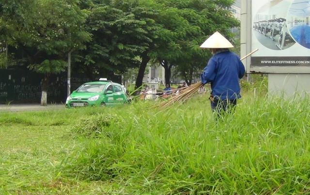 Các tuyến đường như Đại Lộ Thăng Long, Trần Duy Hưng, Nguyễn Chí Thanh có dại, cây hoa tốt ngập đầu người