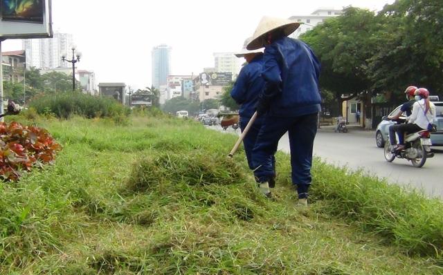 Hà Nội: Công nhân chật vật cắt cỏ dại trên phố - 7