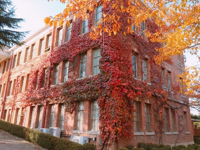 Khuôn viên trường được trồng rất nhiều loại cây khác nhau với tán lá đổi màu theo mùa cực đẹp mắt.