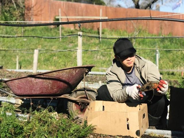 Tường Lân (tác giả bài viết) đang thu hoạch cà rốt tại khu vườn cộng đồng.