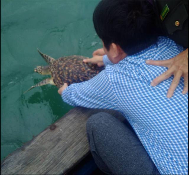 Các cơ quan chức năng thả con rùa về lại biển