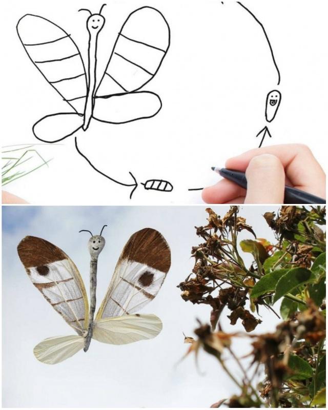 Một loài bướm mới được phát hiện?
