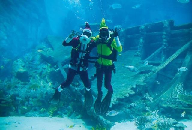 Buổi sáng: Gặp gỡ ông già Noel và những thần lùn giữa thủy cung sâu thẳm với Merry Fishmas ở S.E.A. Aquarium.