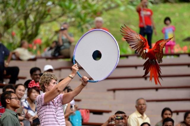 Buổi sáng: Khám phá thế giới tự nhiên muôn màu tại vườn chim Jurong.