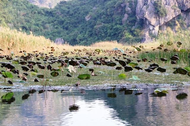 Cảnh sắc hoang sơ tuyệt đẹp ở đầm Vân Long - 16