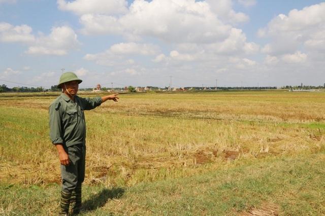 Hàng nghìn ha đất sản xuất nông nghiệp của người dân các xã Khánh Thiện, Khánh Tiên... bị nước mặn xâm nhập dẫn đến năng xuất kém, người dân có nguy có bỏ ruộng.
