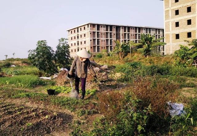 Người dân thấy đất dự án bỏ hoang thì tiếc, nên ra khai hoang canh tác rau và hoa màu kiếm thêm thu nhập.