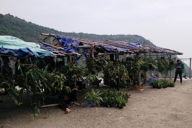 Ghé thăm chợ hoa phong lan giữa núi rừng Tây Bắc - 10
