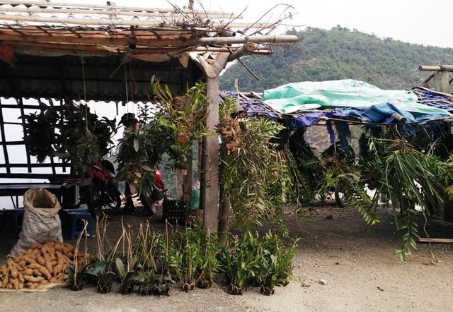 Ghé thăm chợ hoa phong lan giữa núi rừng Tây Bắc - 11