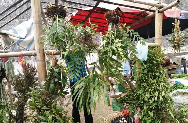 Những nhánh lan rừng được người dân bày bán rất bắt mắt du khách. Giá từng giỏ lan có giá không hề rẻ, giao động từ 200 nghìn - 1 triệu đồng.