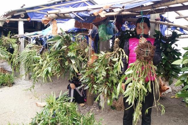 Ghé thăm chợ hoa phong lan giữa núi rừng Tây Bắc - 6