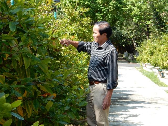 Theo ông Quý, trừ các khoản chi phí, mỗi năm vườn cây của ông thu lãi khoảng 1 tỷ đồng