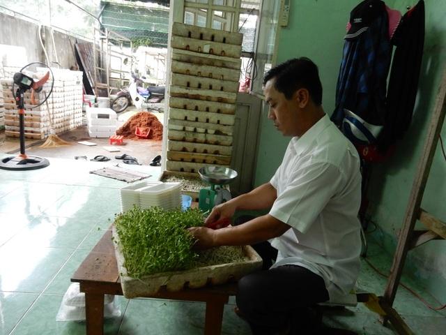Đến ngày thu hoạch, rau mầm được cắt rồi đóng vào hộp, chở đi bỏ cho khách hàng