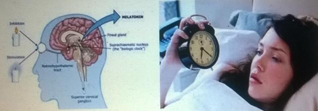 Melatonin, đồng hồ sinh học và giấc ngủ - 1