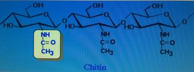 Chitosan: Nguyên liệu quý từ vỏ tôm, cua - 2