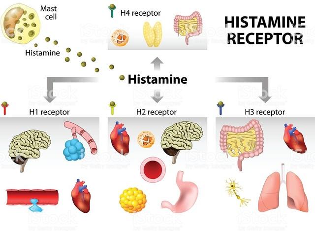 Histamine: Chất sinh học, gây dị ứng và nhiễm độc? - 3