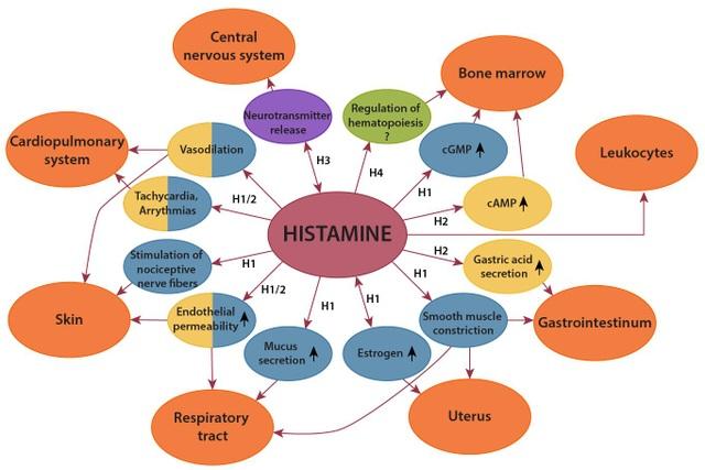 Histamine: Chất sinh học, gây dị ứng và nhiễm độc? - 4