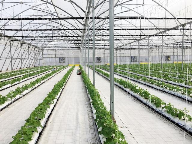 Vingroup ra mắt sản phẩm trái cây nhà kính đầu tiên - 2