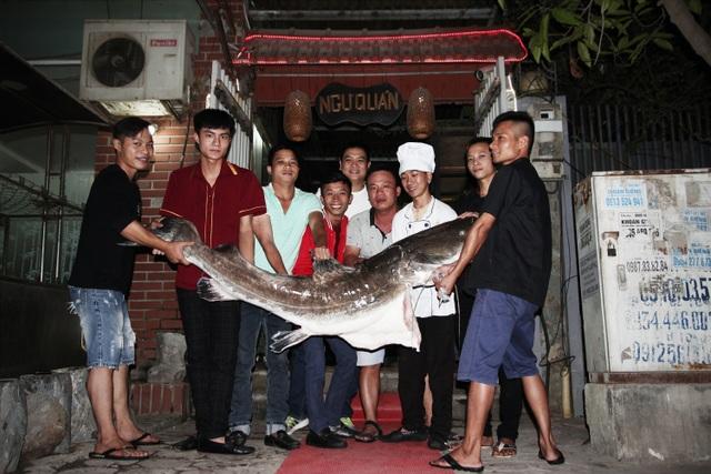 Nhà hàng Ngư Quán săn được cá lăng siêu khủng nặng 70kg được xếp vào hạng xưa nay hiếm.