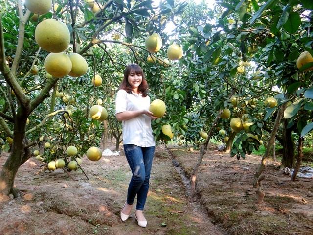 Không chỉ có cam, Hội chợ còn có nhiều các loại cây căn quả có múi như bưởi, quýt… và nhiều loại nông sản đặc sắc của tỉnh Hưng Yên