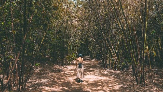 Làng tre Phú An là một trong những khu bảo tồn tre lớn nhất Đông Nam Á với hơn 130 loại tre. Ảnh chụp bởi @ngotranhaian với Canon EOS M6