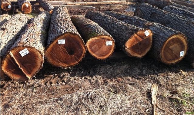 Đẳng cấp và sang trọng với nội thất gỗ Óc chó Woodpro - 1
