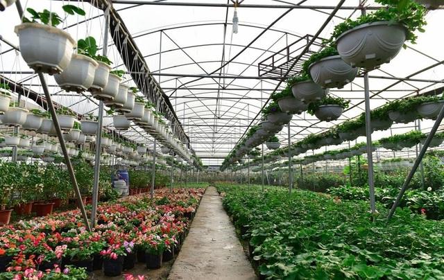 Hệ thống nhà lưới, nhà giàn hiện đại của các hộ trồng hoa