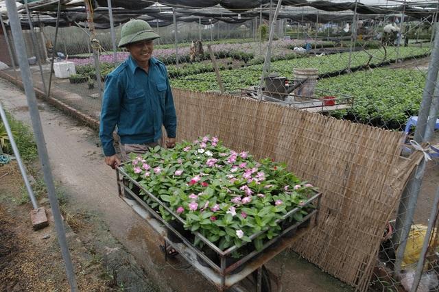 Xuân Quan: Rực rỡ làng hoa gắn với du lịch sinh thái - 4