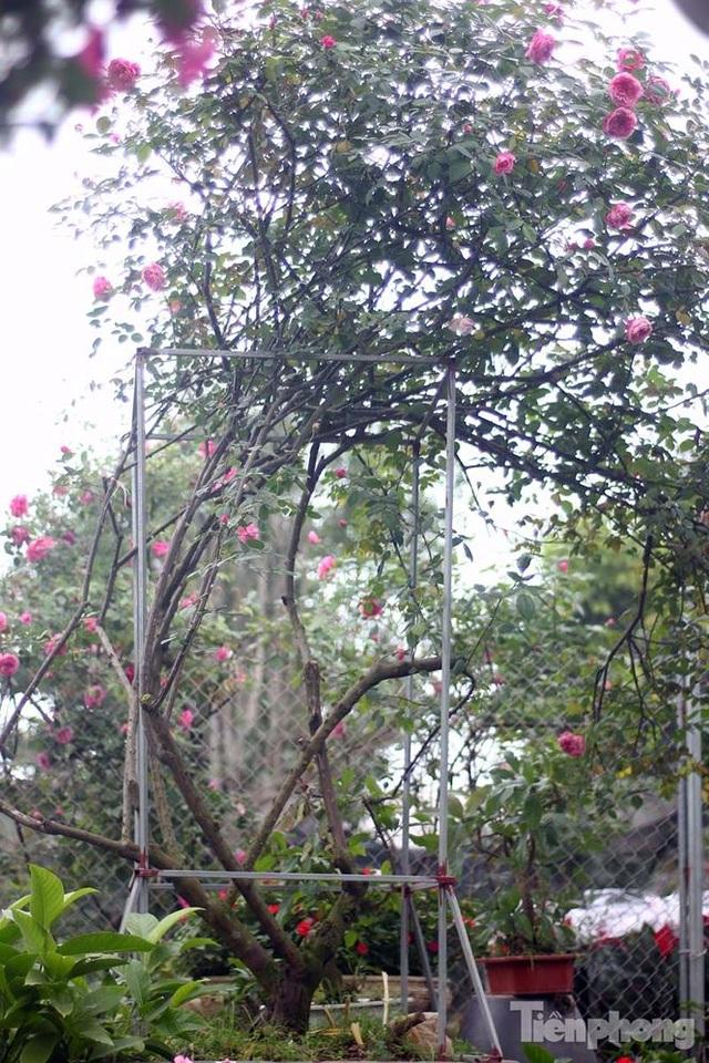 Xuân Quan: Rực rỡ làng hoa gắn với du lịch sinh thái - 5