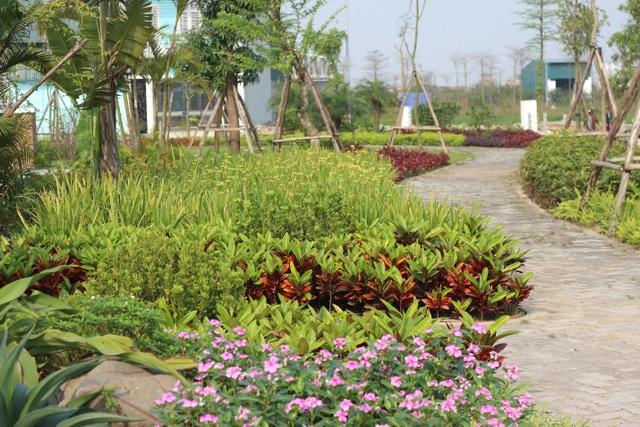 Apec Đa Hội dành 37,5% diện tích cho không gian cây xanh và công trình công cộng