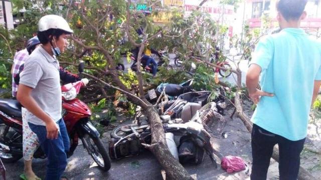 Nhánh cây đè trúng nhiều người đi đường và xe máy