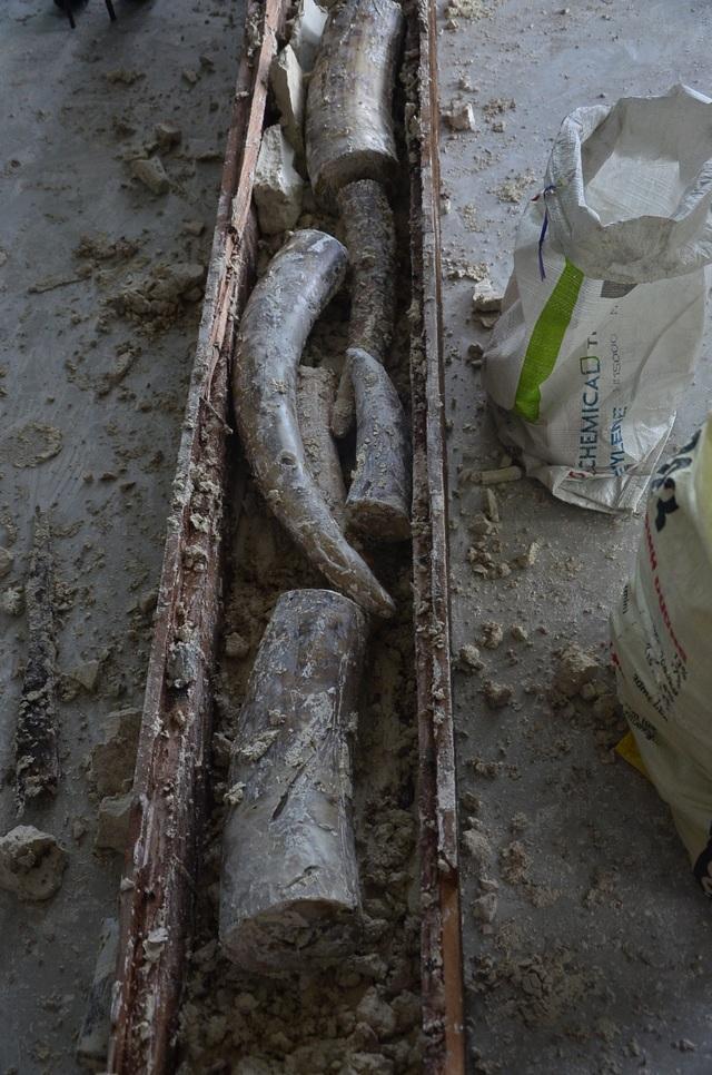 Cận cảnh quy trình lấy những khúc ngà voi ra khỏi khối gỗ