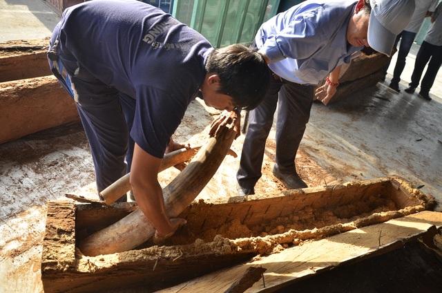 Mỗi khúc gỗ như thế này có thể chứa được 2 cặp ngà voi