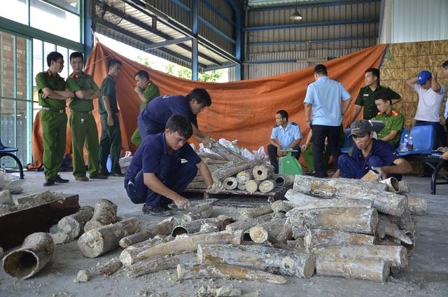 Ngà voi sau khi được nhập lậu vào Việt Nam sẽ được các đối tượng vận chuyển sang Trung Quốc tiêu thụ