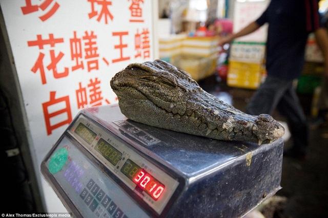 Một vị khách tới mua đầu cá sấu ở khu chợ Hunagsha. Bộ phận này thường được dùng để nấu thành canh súp. Theo quan niệm của y học cổ truyền Trung Hoa, người ta tin rằng thịt cá sấu có thể điều trị bệnh phổi và cải thiện trí nhớ.